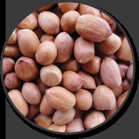 Markets - Tiga Rasa Indonesian Spices, Tamarind, Candlenut, Green